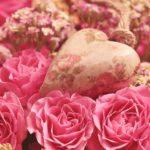 薔薇のミッション 自分を下げる癖をやめてみよう。